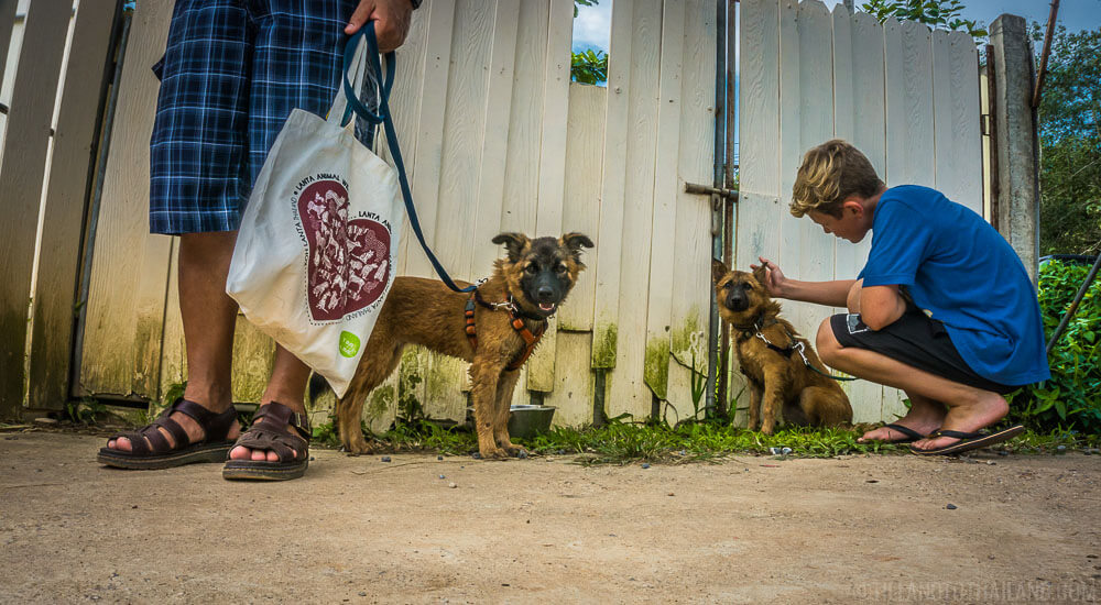 Walk dogs at Lanta Animal Welfare on Koh Lanta, Thailand