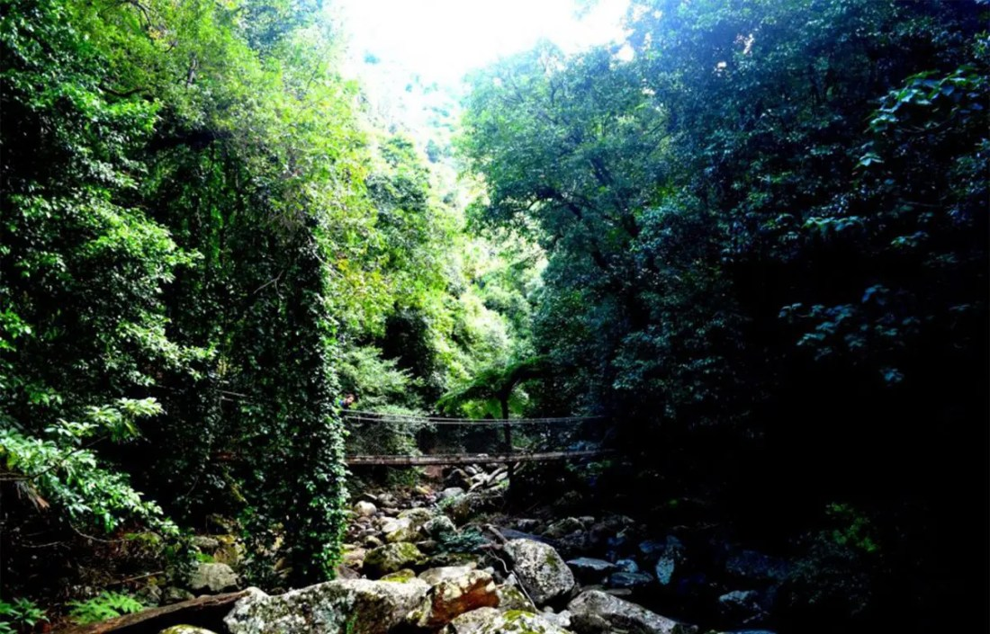 Puente Minnamurra Rainforest, NSW, viajar a Australia