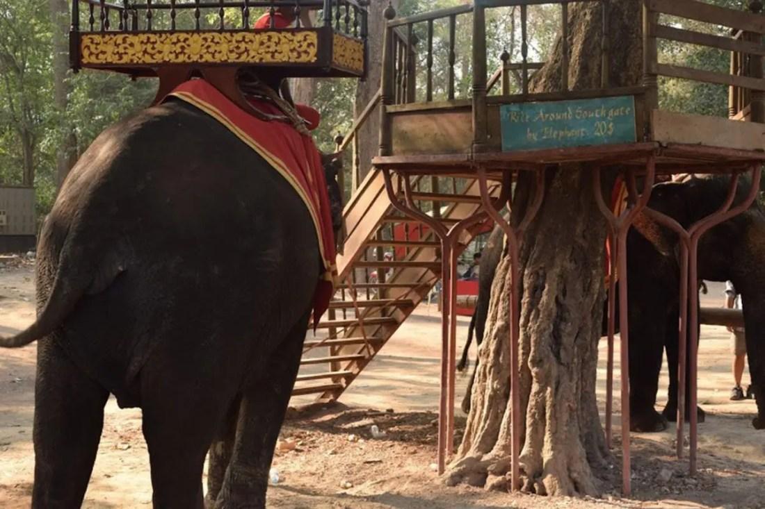 Elefantes Angkor Wat