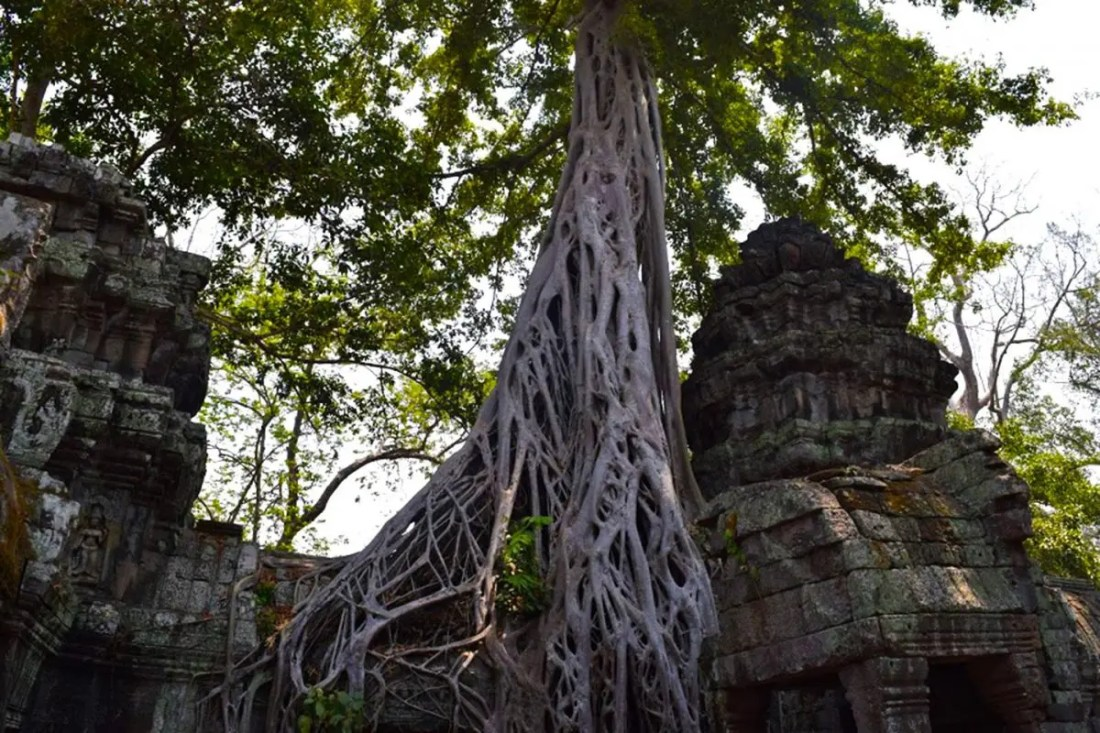Templo Ta Prohm Angkor Wat Camboya