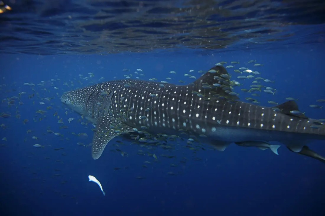 Costa de Ningaloo y Shark Bay