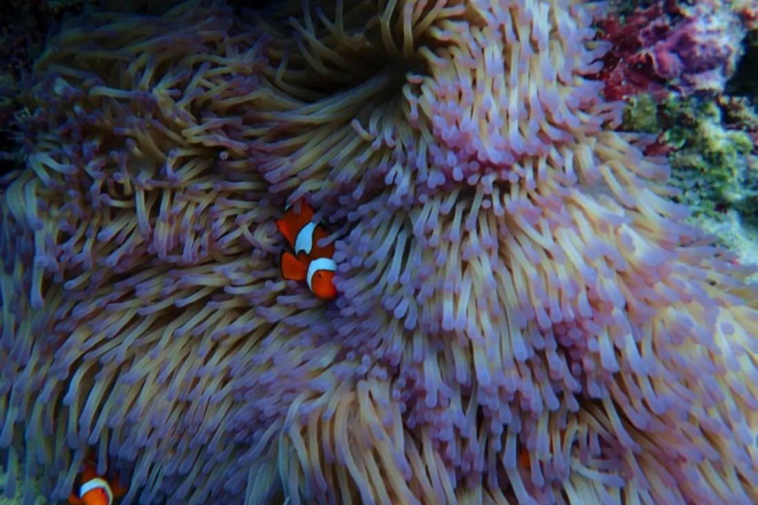 Great Barrier Reef Marine Park. Australia Barrera de Coral