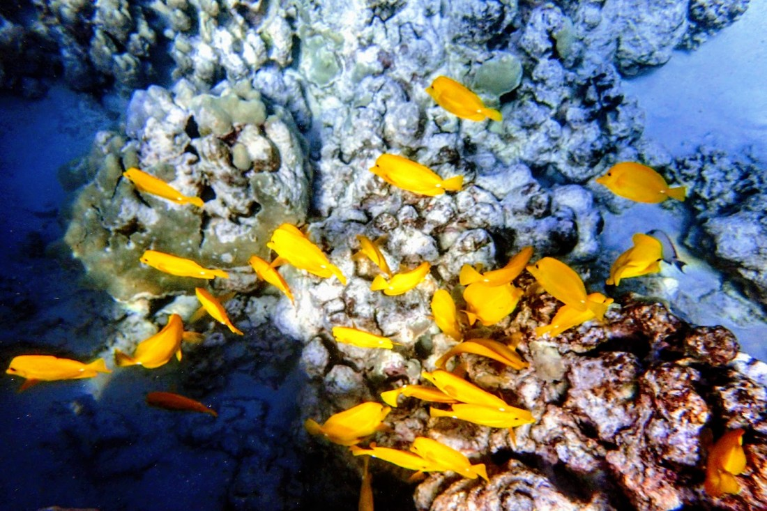 Snorkel Maui Hawaii