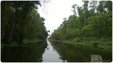 Đường vào rừng tràm với nhiều muông thú: cò, vạc, bìm bịp...