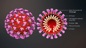 300px-3D_medical_animation_coronavirus_structure_vie