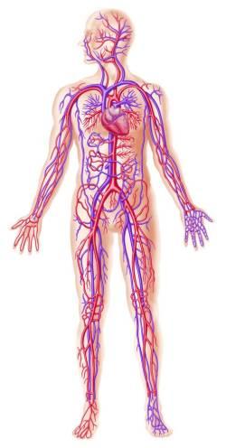 leukocyturia hypertransaminasemia és hirtelen fogyás