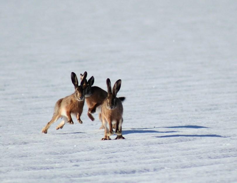 Warum beißt mein Kaninchen in den Käfig. Hase die in freier Wildbahn viel Platz haben zum Laufen.