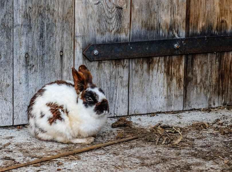 Warum beißt mein Kaninchen in den Käfig. Hasen mögen natürliche Materialien.