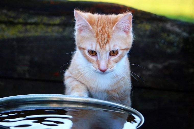 Katze wird Wasser mit Pfote trinken vor Wasserschüssel