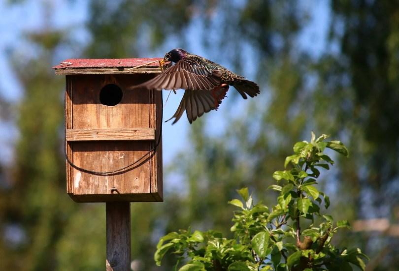 Vögel beim Nisten helfen mit Nistkasten.