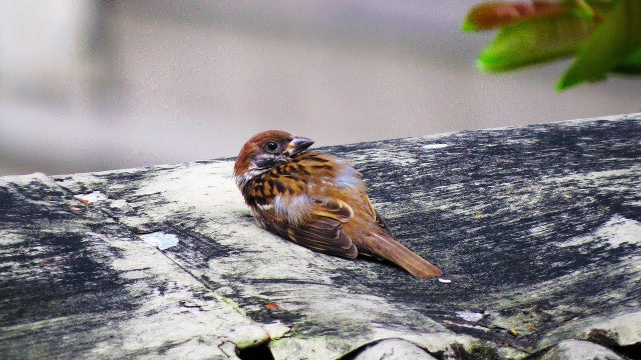 Können Vogelknochen heilen?