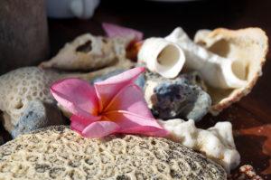 Lombok-Muscheln