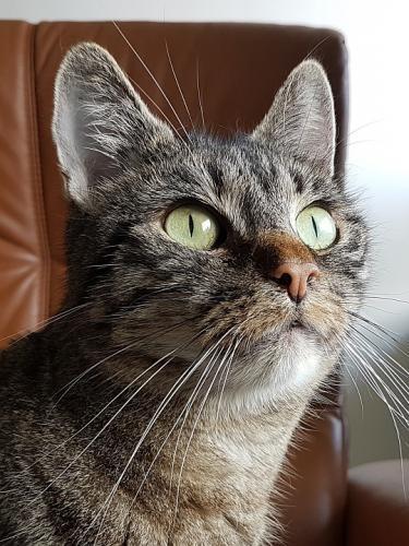 treue Katzenseele verliert sein Zuhause. Wem darf er noch einmal seine Zuneigung schenken