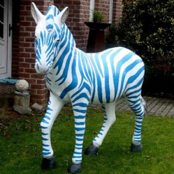 Duisburg Zebra Blau Weiß