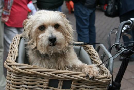 Fahrradkorb fuer Hunde Lenkrad oder Gepaecktraeger