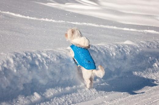 Hundemantel Hund vor Wind und Wetter schuetzen
