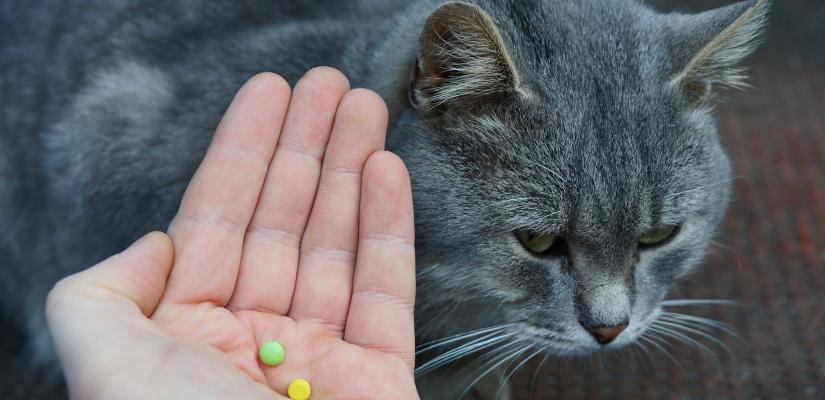 Wurmkur Bei Der Katze So Lauft Das Ab Tiermedizin Dr Gumpert