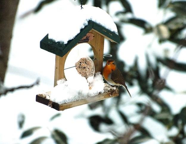 Rotkehlchen im Winter am Futterhäuschen