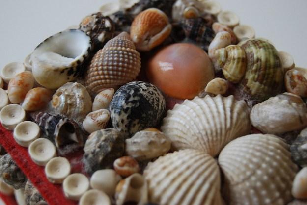 Schalen von verschiedenen Muschelarten.