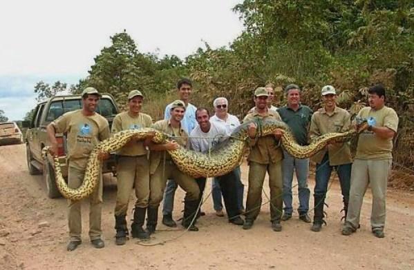 Größte Schlange der Welt
