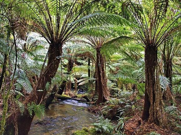 Australische Pflanzen