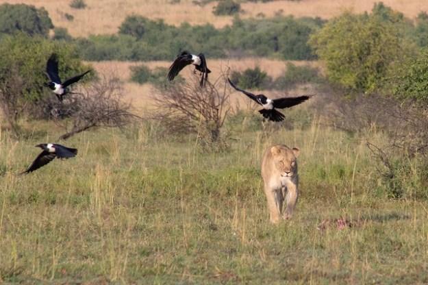 Vogelwelt Afrika