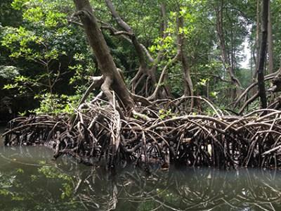 mangrove-swamp