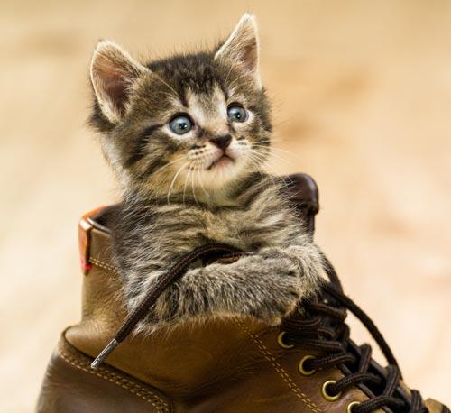 Katze adoptieren Tierschutz Tirol