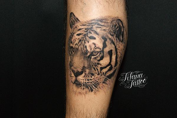 虎のポートレイトタトゥー | ギャラリー | Tifana Tattoo - 東京・渋谷のタトゥースタジオ