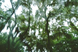 As we entered Amelia Island, there were some really somber trees with an accentuated creepiness due to the downpour.