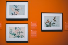 Other than his famous painting of waves, he also painted beautiful photos of flowers.