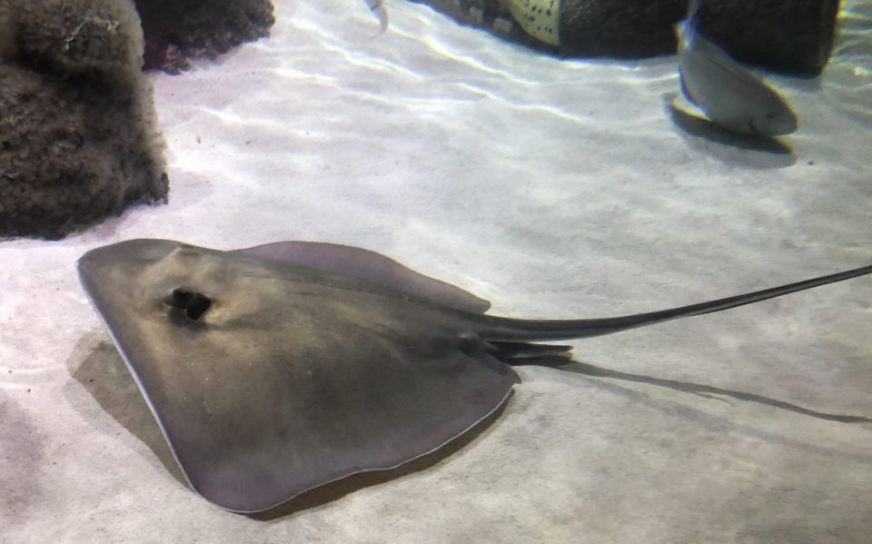 Why You Need To Visit The Orlando Sea Life Aquarium-Tiffany D. Brown