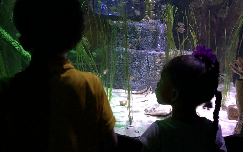 Why You Need To Visit The Orlando Sea Life Aquarium-Tiffany D. Brown