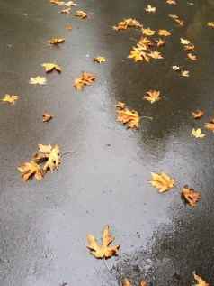 Wet leaves