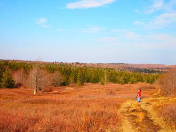 dolly sods 3
