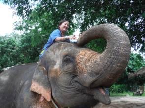 me on elephant