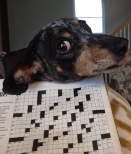 My pup expresses disgust with easy crossword puzzles.