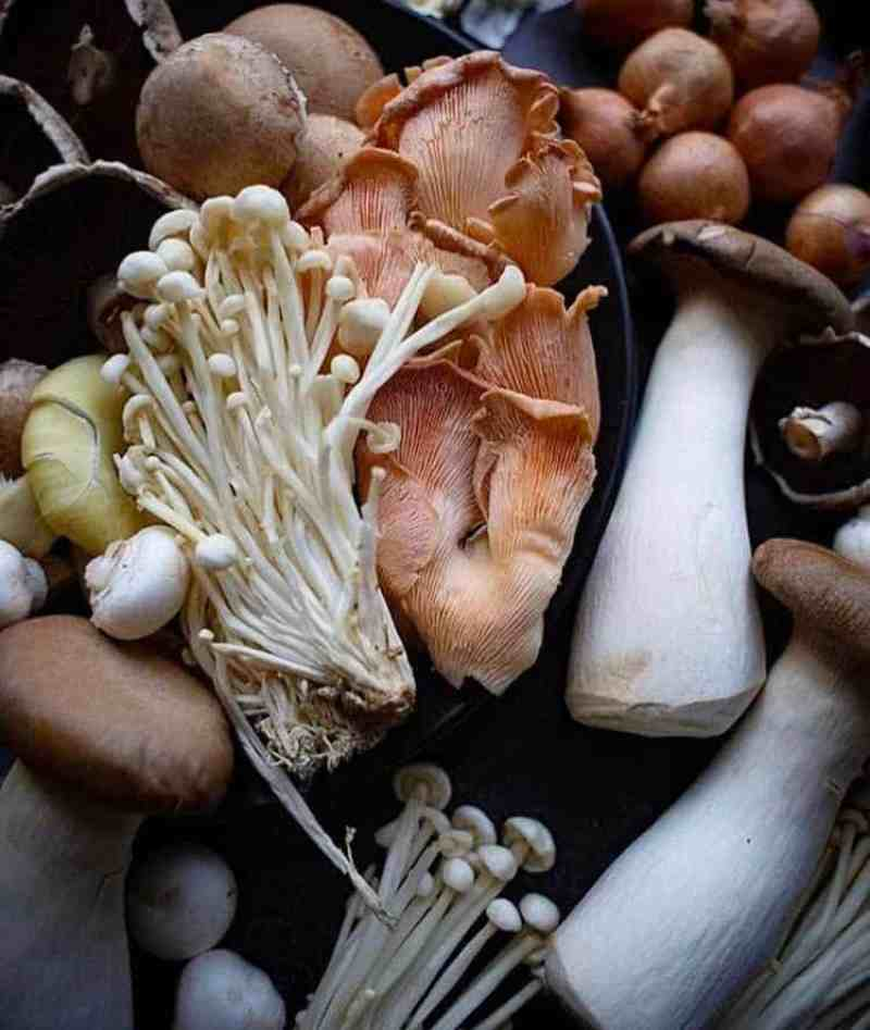 A variety of mushrooms on a plate
