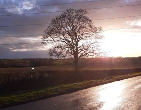 Tree and road view