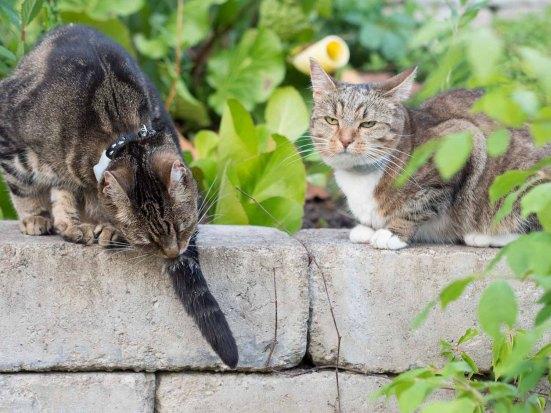 Tiger och Milou tillsammans