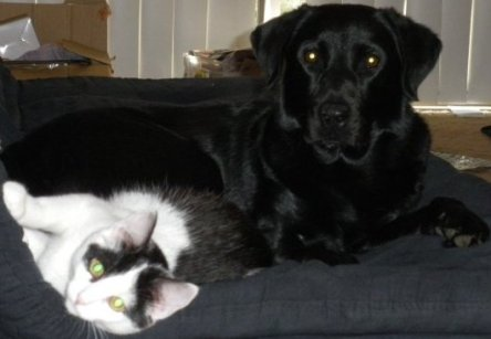 My cat and dog from Australia