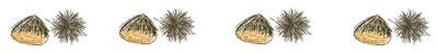 フリー素材:飾り罫・ライン;ガーリーな栗のwebデザイン素材