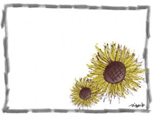 夏のwebデザインのフリー素材:鉛筆風のラフなフレームとガーリーなヒマワリ(2輪)