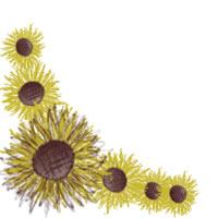 夏のフリー素材:バナー広告,アイコン素材;ガーリーなひまわりの花いっぱいのフレームのイラストのwebデザイン素材