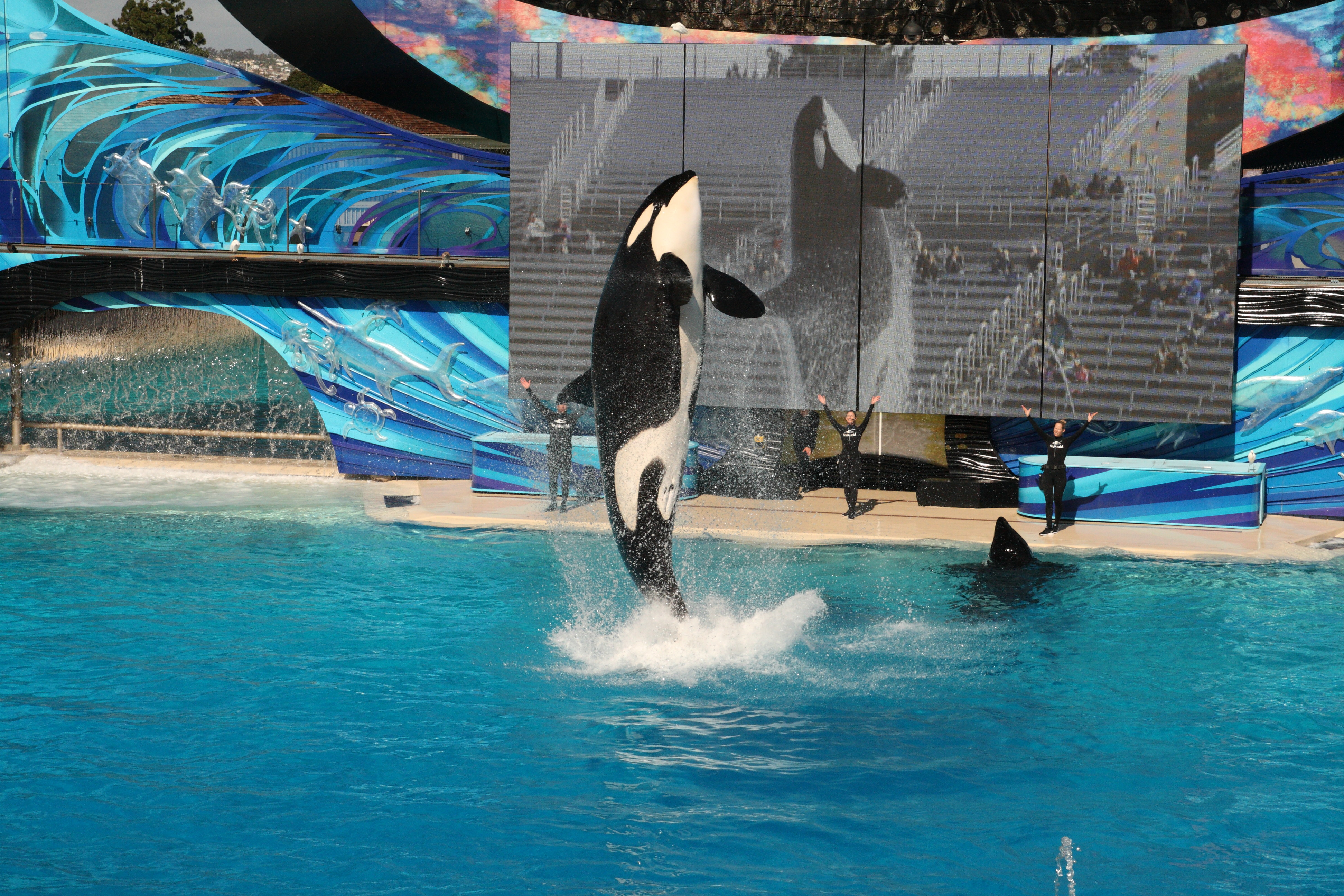 How to spend 3 days in San Diego: Part 1 – SeaWorld