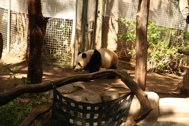Cheap San Diego Zoo Tickets - panda