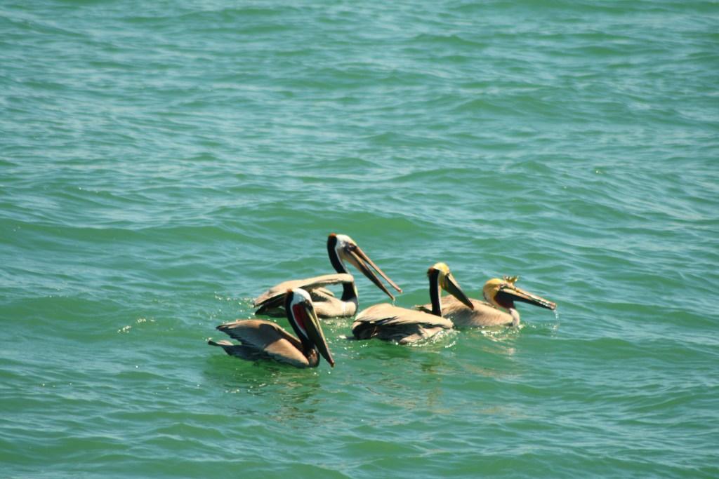 USA West Coast Road Trip - Marine animals in San Diego Bay