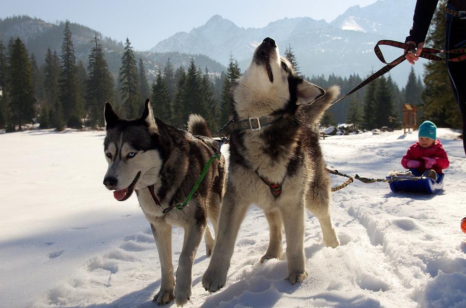 winter activities in rovaniemi