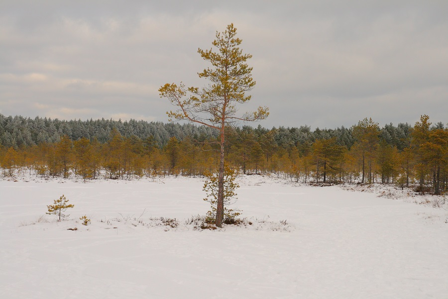 Lahemaa National Park Viru Bog Trail in Winter