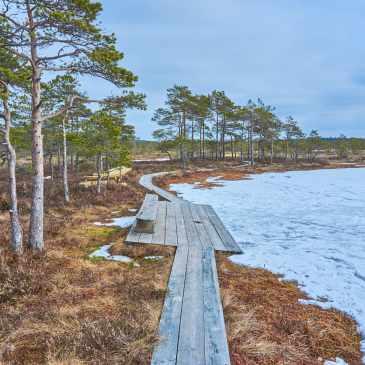 Soomaa National Park Riisa Nature Trail